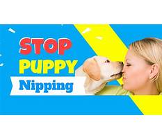 Best Training puppy not to nip