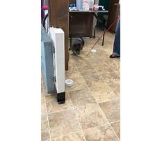 Best Training your dog to do nose work.aspx