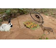 Best Trapping rabbits on youtube