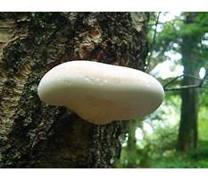 Best Treat wood for mold.aspx