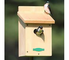 Best Tree swallow bird houses for sale