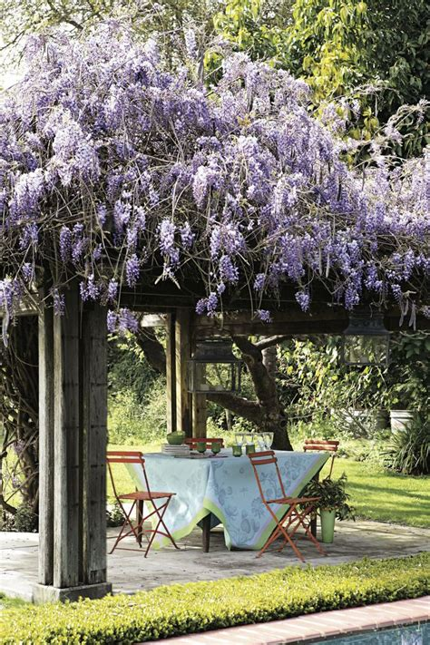 Trellis Plans For Wisteria