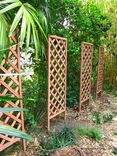 Trellis Plants For Privacy