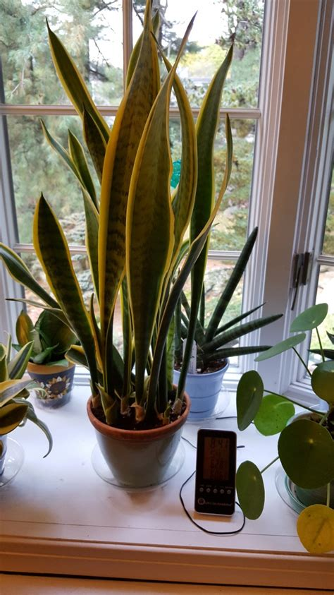 Trendy House Plants
