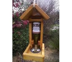Best Tui bird feeder plans
