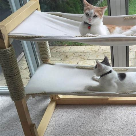 Unique Diy Cat Furniture