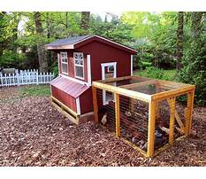 Best Urban farmer chicken coops