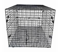 Best Ware rabbit hutch runs near