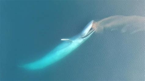 Whale Boat Plans