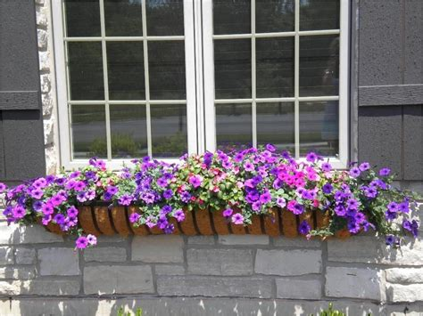 What Are The Best Plants For Window Boxes