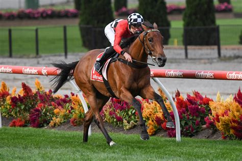 What Happens To Winning Horse On Race Day And What Is Roulette Bet In Horse Racing