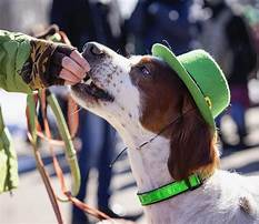 Best What are good dog treats for training.aspx
