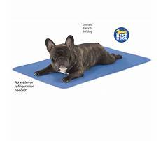 Best What is a training leash for dogs.aspx
