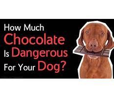 Best What is the best way to potty train a dog.aspx