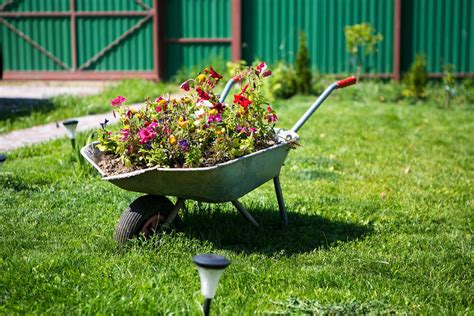 Wheelbarrow Planter Ideas Which Plants To Use