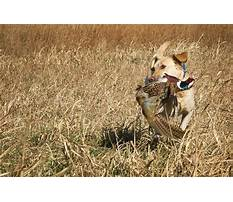 Best When to feed before or ater training a dog.aspx