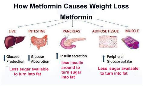 Where To Buy How Long Does Metformin Take To Work For Weight Loss