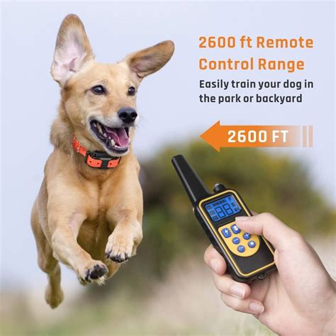 Where To Buy Dog Training Collars And Can Dogs Be Esa Certified Without Training