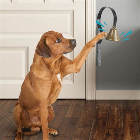 Which bell for dog training Image
