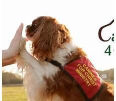 Best Who makes gravy train dog food.aspx