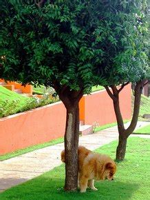 Why-Does-Napoleon-Urinate-On-The-Windmill-Plans
