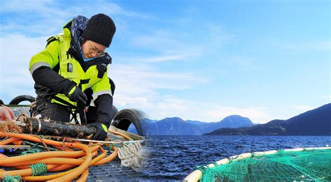 [pdf] Wild And Farmed Salmon In Norway  A Review - Ntnu.