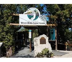 Best Wild bird center tavernier