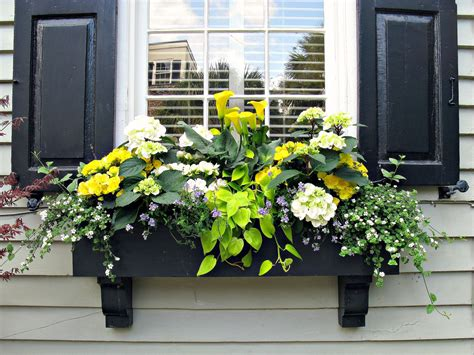Window Box Designs For Sun