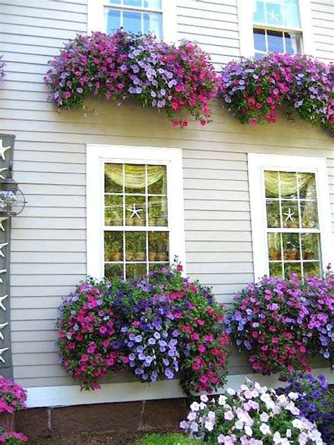 Window Box Flowers Ideas