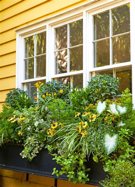 Window Box Garden Plans