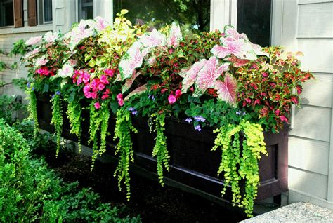 Window Box Planting For Full Sun Flowers