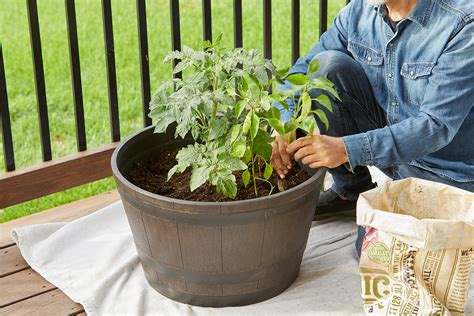 Window Box Planting Plans Veggies High In Fiber