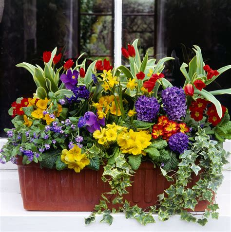 Window Box Plants For Part Sun Containers On Wheels