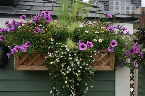 Window Box Plants For Partial Sun Areas Affected