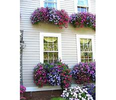 Best Window flower box design ideas