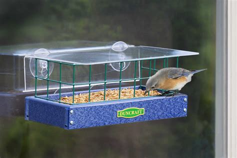Windowsill Bird Feeder Plans