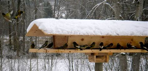 Winter Bird Feeder Plans