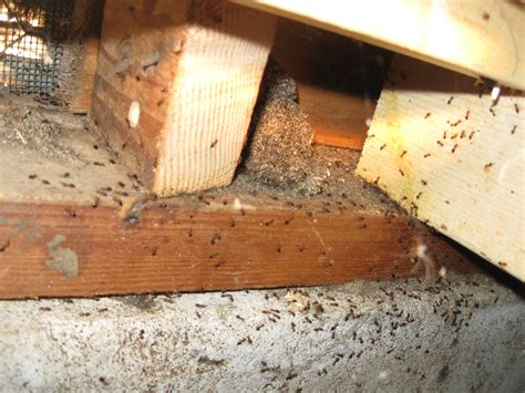Wood Boring Beetle Treatment Diy School