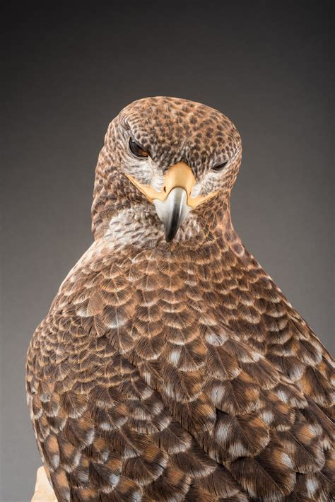 Wood Carving Plans For Red Tail Hawk