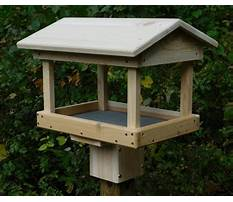 Best Wood bird feeder post
