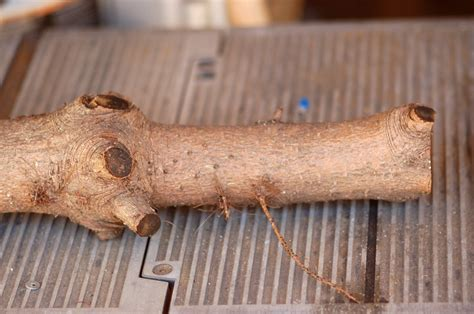 Woodworking Tips And Ideas With Dremel Tools