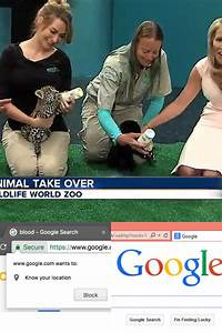 Www.google.com Search Q