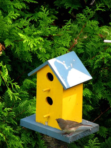 Yellow-Finch-Birdhouse-Plans