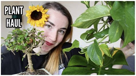 Youtube Houseplant Hauls