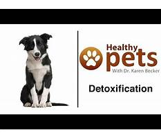 Best Youtube dog whisperer puppy training.aspx