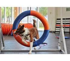 Best Zoom room dog training austin.aspx