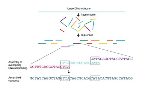 A System For Shotgun Dna Sequencing