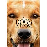 A dog's purpose 2017 watch online good quality