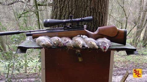 Air Rifle Squirrel Shooting