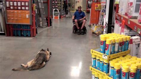 alpha dog training ga levi Image